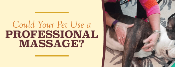 Could Your Pet Use a Professional Massage?